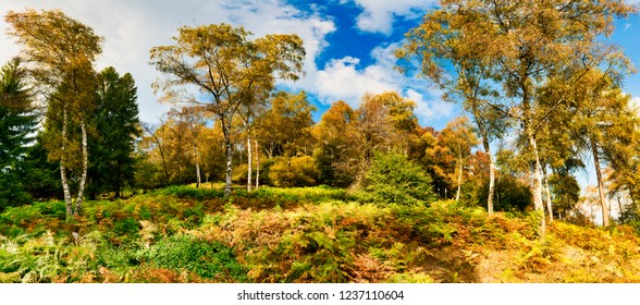 shades of colors in the forest in the fall with the fern plants in the foreground