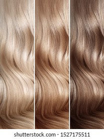 Shades of Natural dyed Hair. Colors Set. Tints. Hair coloring steps from blonde to brown. Strand of beautiful wavy hair.