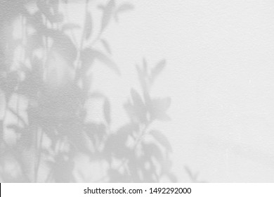 Shadow background of natural leaves tree branch pattern on white concrete wall texture , black and white monochrome, nature shadow pattern art on wall, copy space
