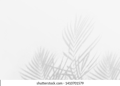 Shadow background of palm leaves white wall texture background