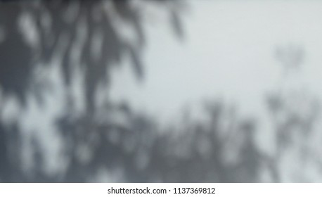 shadow branch of tree with leaf on white wall background