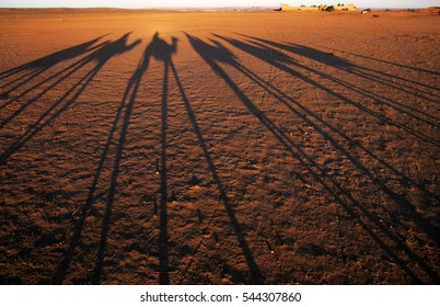 The shadow of a camel train at sunrise in the Sahara Desert at Erg Chebbi in Morocco, North Africa.