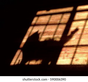 Shadow of a cat in front of a window on a wooden floor