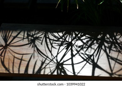 Shadow of a grass on a wooden chair