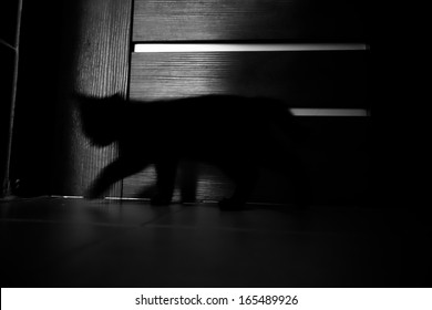 Shadow kitty indoor