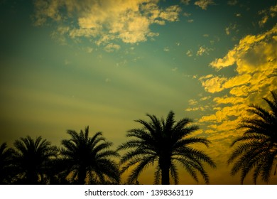 The shadow of a large coconut tree have color that arises from the light that is coming to light the golden horizon is shining in the back the sky with clouds of light passing through.