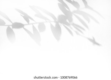 shadow of leaf tree on white wall - black and white gray background