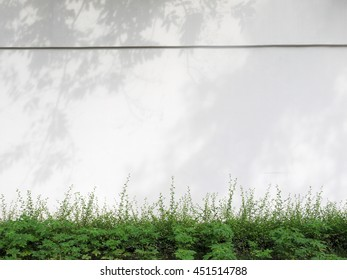 shadow of the leaves on a white wall with green plant
