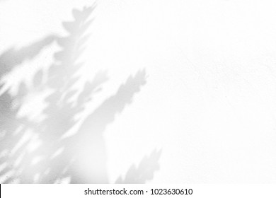 shadow of leaves tree on white for background