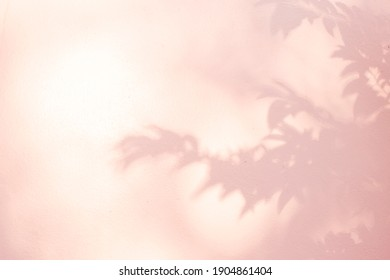 Shadow and light of leaves tree branch background. Natural  colorful leaf pink shadow and light from sunlight dappled on white wall texture for wallpaper overlay and any design