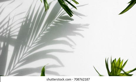 shadow of palm coconut leaves on white concrete wall