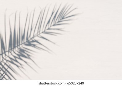 The shadow of the palm leaf on a white wooden surface