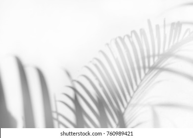shadow of palm leaf tree on white background