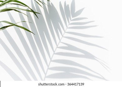 shadow of palm leaves