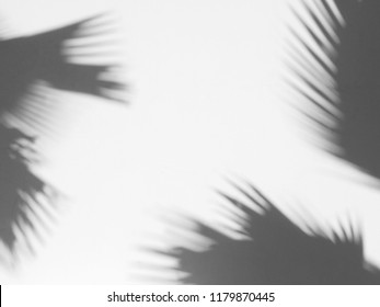 shadow of palm leaves on white wall background