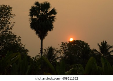 The shadow of the palm tree caused by the rising sun.