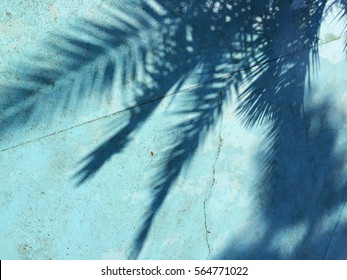 Shadow of a palm tree on a Blue background