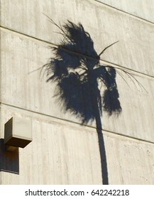 Shadow of a palm tree on a concrete building facade