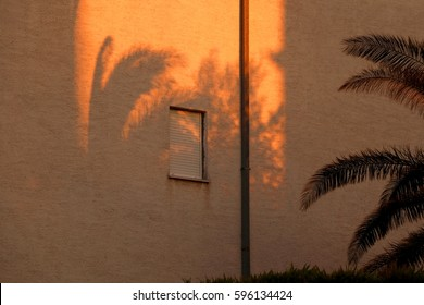 Shadow of a palm tree on a generic building wall, during golden hour.