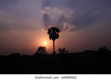 The shadow of the palm tree while the sun is falling