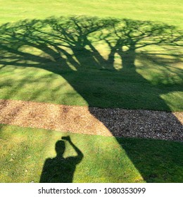 shadow of a person taking a photo with a mobile phone of a shadow of a large oak tree