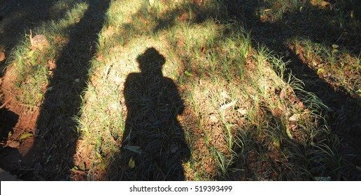shadow of a person and trees on grass