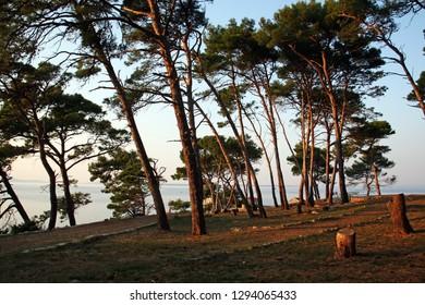 Shadow of pine trees in Veli Losinj, island Losinj, Croatia, Europe, September 2018.