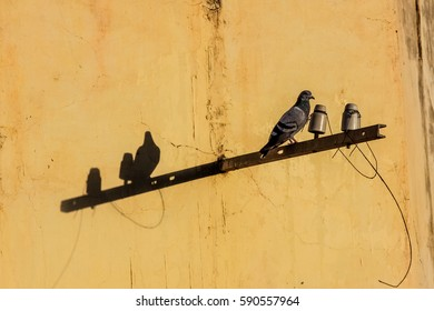 Shadow Play - doves sitting in front of a yellow wall in the sunlight, Udaipur, Rajasthan, India