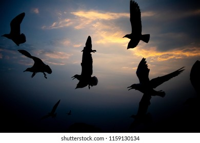 shadow of seagulls on evening sky