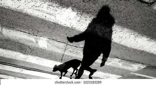 Shadow silhouette of a person walking a dog on a leash and crossing the street