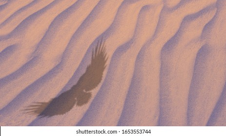 The shadow of a soaring eagle against a background of sand. Top view. Sand waves