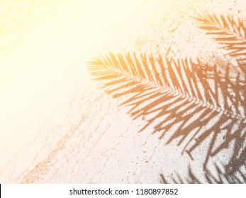 Shadow sun silhouette with Palm Tree Leaves raise up on the road background.palm sunday concept.