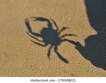 Shadow of a toy crab reflecting in the sand, close-up. Baltic sea, Latvia. Childhood, educational toys, science, biology concepts