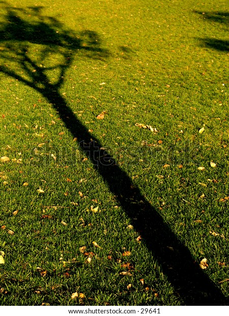 A shadow of a tree in Battery park, NYC
