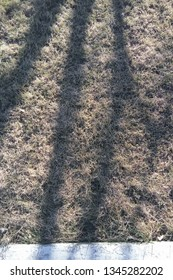 Shadow of tree branches on dey frass