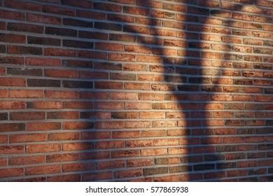 Shadow of Tree in Brick Wall