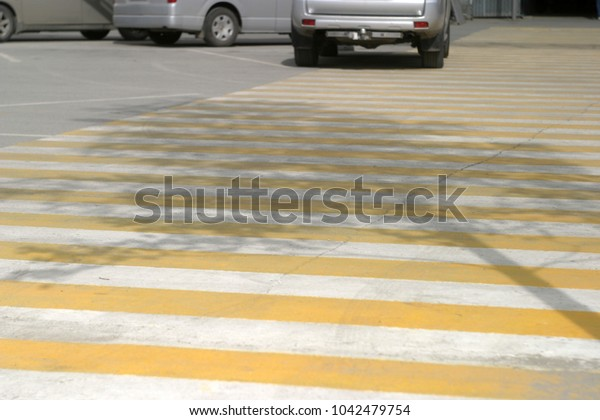 A shadow of a tree on the road, a pedestrian crossing. Summer background