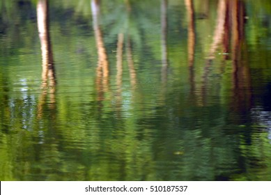 Shadow of tree on water