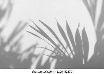 shadow tree on white wall