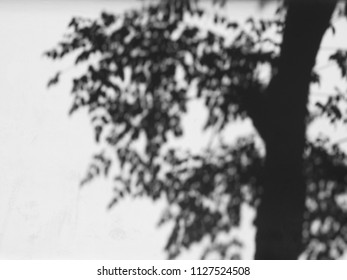 shadow of tree on white wall background