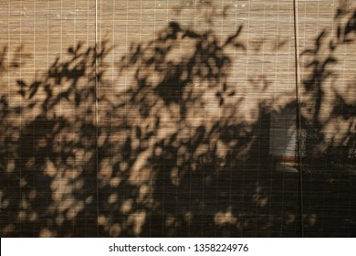 Shadow trees on bamboo wood blind window texture, Abstract seamless background, Asian decorating home