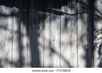 Shadow trees on the house wall