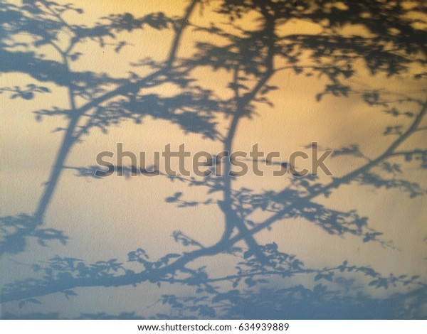 Shadow of trees on the house wall