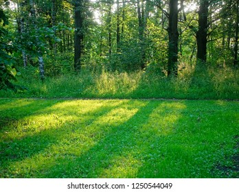 shadow of trees in the Park in summer, Moscow