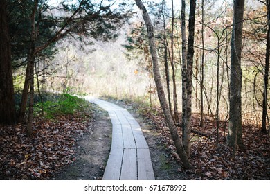 Shadowed Path in the Woods