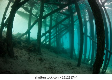 The shadowed pilings of a pier in Raja Ampat, Indonesia, provide habitat for shade-loving fish and invertebrates.