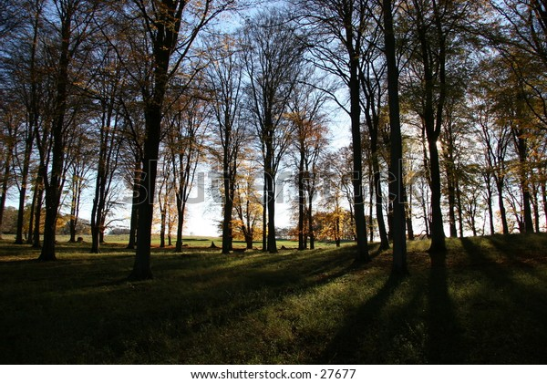 Shadowing autumn