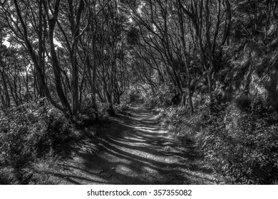 Shadowland, Abel Tasman N.P., New Zealand (black and white).