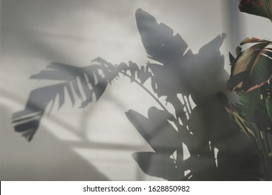 Shadows of banana plant in the wall