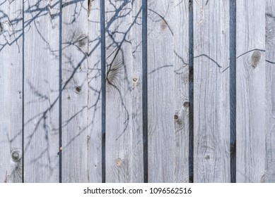 shadows of branches on the fence
